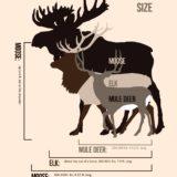 Size Comparisons for Moose, Elk, and Mule Deer