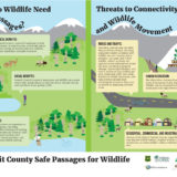 Why Do Wildlife Need Safe Passages Poster