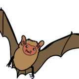 Cartoon of a little brown bat for the Bat Adoption Handout for Rocky Mountain Wild, created by Chris Talbot-Heindl, 2021